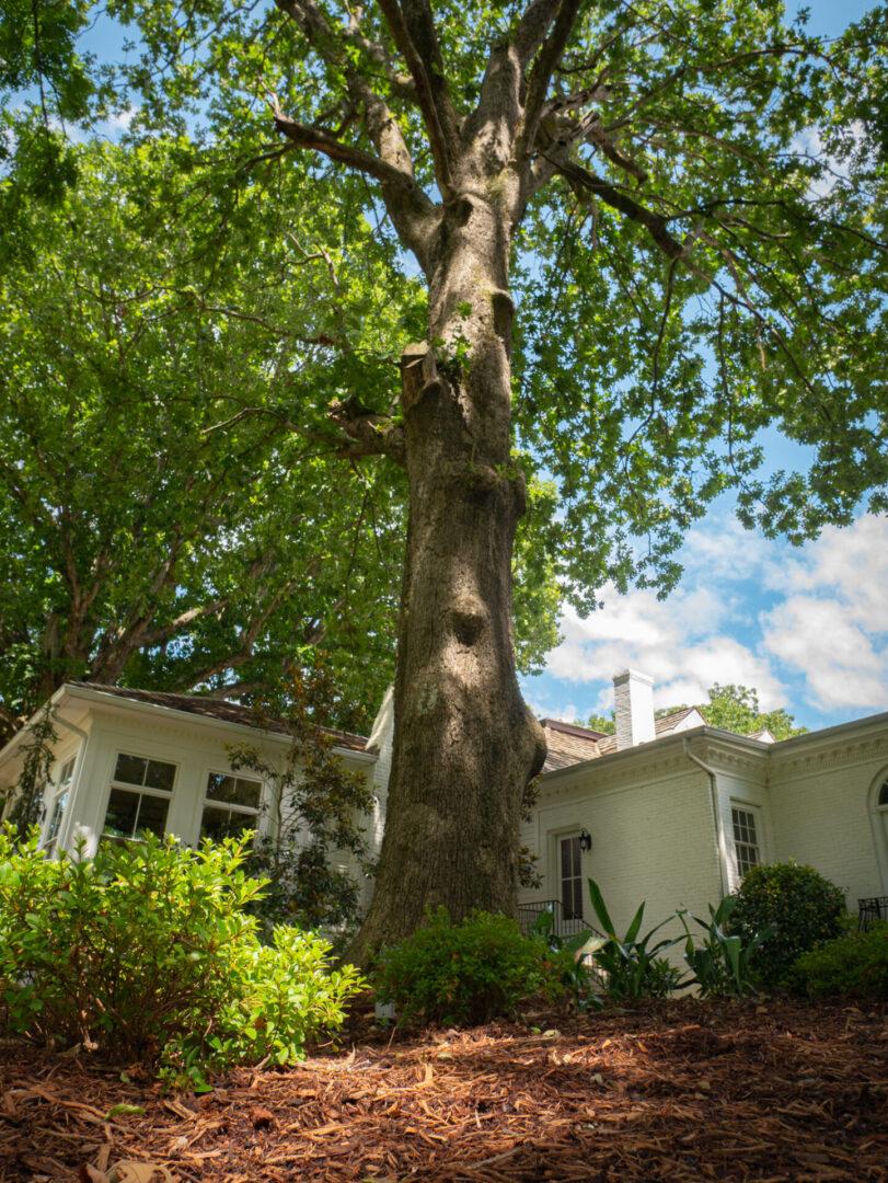 Old tree in Serenata Farm in Madison, GA