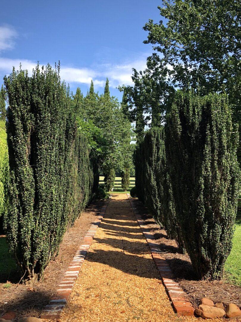 rustic romantic walkway lined with topiaries, Serenata Farm in Madison, GA