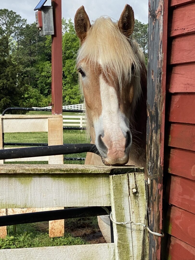 brown white horse at Serenata Farm in Madison, GA